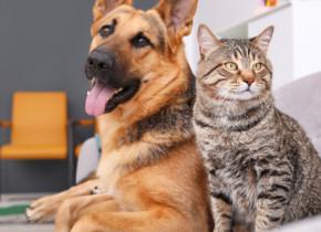 """De ce n-ar trebui să folosești dezinfectant de mâini pentru curățarea lăbuțelor câinelui sau pisicii: """"Pericolul e mare!"""""""