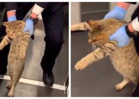 """Momentul bizar în care o pisică e dată jos dintr-un tren. Imaginile au făcut furori pe internet: """"E așa adorabilă!"""""""