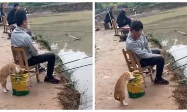 """Cum a încercat o pisică să-și potolească foamea. Imaginile ei fac furori pe internet: """"Determinarea ei e remarcabilă!"""""""