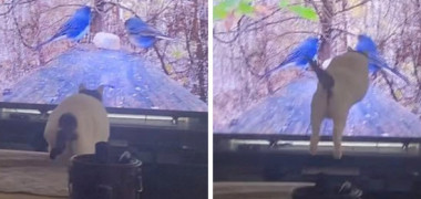 """Momentul în care o pisică sare pe televizor ca să prindă două păsări. Imaginile sunt virale: """"N-am mai văzut asemenea mișcări!"""""""