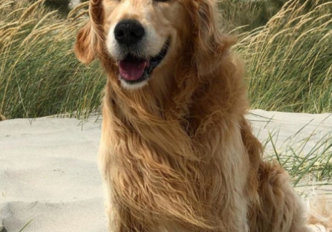 Un câine diagnosticat cu o tumoră pe creier a primit tratament specific bolnavilor de cancer. Ce a urmat i-a uimit pe stăpâni
