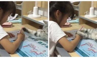Momentul amuzant în care o pisică încearcă să-i distragă atenția unei fetițe care își face temele. Imaginile sunt virale