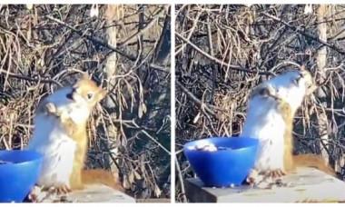 O veveriță beată, senzația momentului pe internet. Imaginile inedite au făcut înconjurul lumii