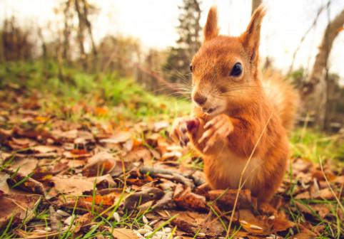 Care sunt cele mai inteligente animale de pe planetă. Veverițele au fascinat oamenii de știință au această abilitate