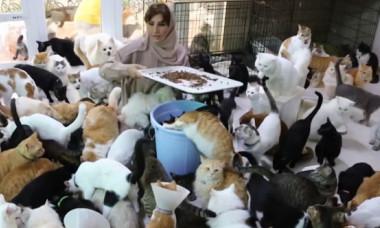 """O femeie crește 480 de pisici și 12 câini: """"Felinele mi-au salvat viața!"""" Cât plătește pentru hrana lor"""