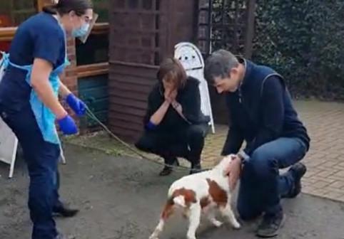 """Un câine furat s-a întors la stăpânii săi după șase ani: """"Ne pierdusem orice urmă de speranță!"""""""