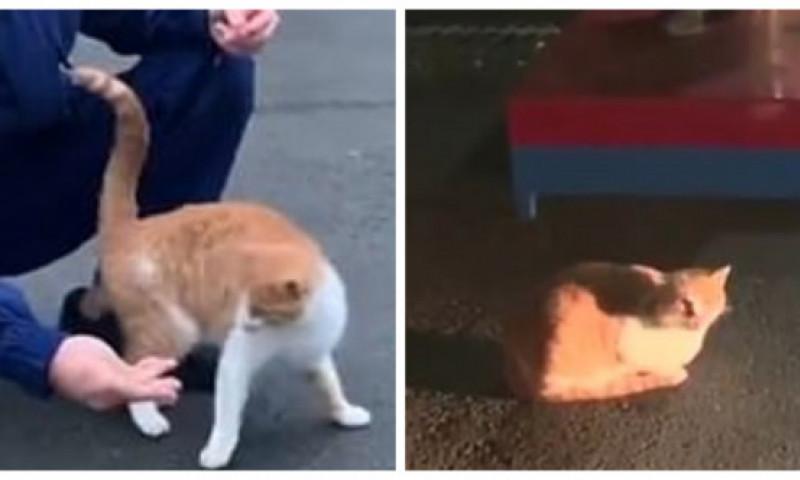 O pisică subnutrită a ajuns în curtea brigadei de pompieri. Ce a urmat apoi a impresionat o lume întreagă