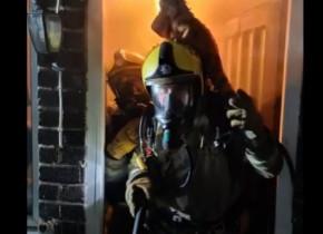 O iguană a scăpat cu viață dintr-un incendiu. Cum a fost posibil i-a surprins total pe pompierii care au intervenit de urgență