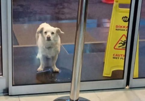 Un câine și-a așteptat stăpânul în fața unui spital din Turcia timp de aproape o săptămână. Ce s-a întâmplat apoi a impresionat lumea