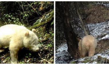 Animal extrem de rar, surprins într-o pădure. Imaginile incredibile fac furori pe internet