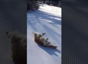 Momentul în care un câine ajunge pe pârtia de schi. Imaginile fac înconjurul lumii