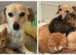 """Ce a făcut un câine după ce stăpâna sa i-a adus acasă două pisici abandonate. Povestea a impresionat lumea: """"S-a întâmplat natural"""""""