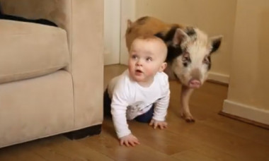 Un bebeluș pasionat de personajul Peppa Pig a primit un cadou inedit: un purcel adevărat. Imaginile cu cei doi prieteni sunt adorabile