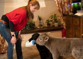 Un vițel nou-născut a fost adus într-o casă unde se afla un câine. Ce s-a întâmplat apoi e viral