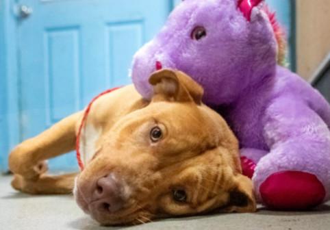 Un câine a intrat de cinci ori într-un magazin, atras de un unicorn. Ce s-a întâmplat apoi a impresionat o lume întreagă