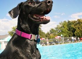 """Momentul surprinzător în care un câine de talie mare își salvează prietenul patruped de la înec: """"Merită o medalie"""""""