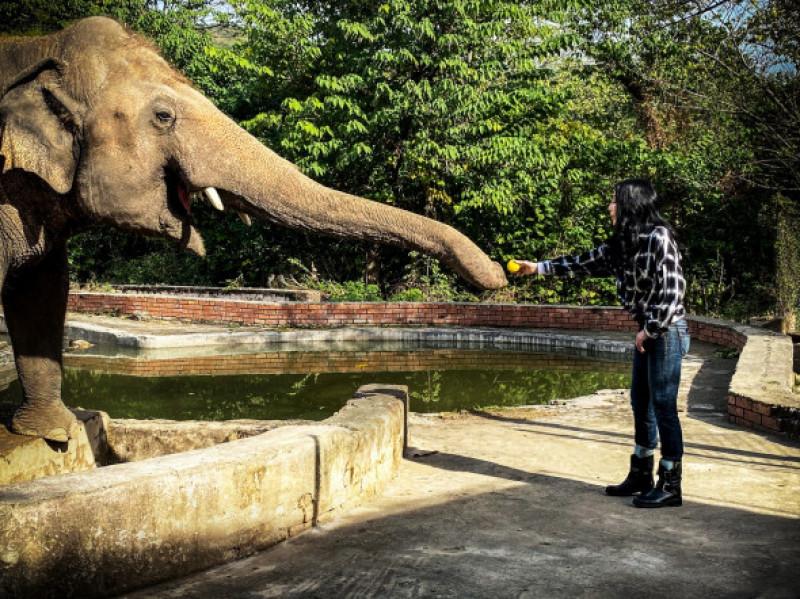 Cher şi elefantul Kavaan