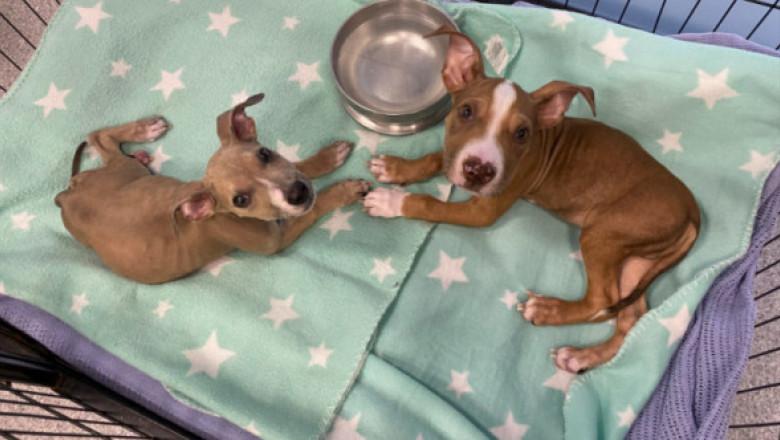 Un cuplu și-a hrănit câinii cu alimente vegane luni de zile. Ce s-a întâmplat apoi a revoltat o lume întreagă