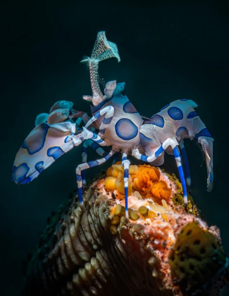 creaturi subacvatice (2)
