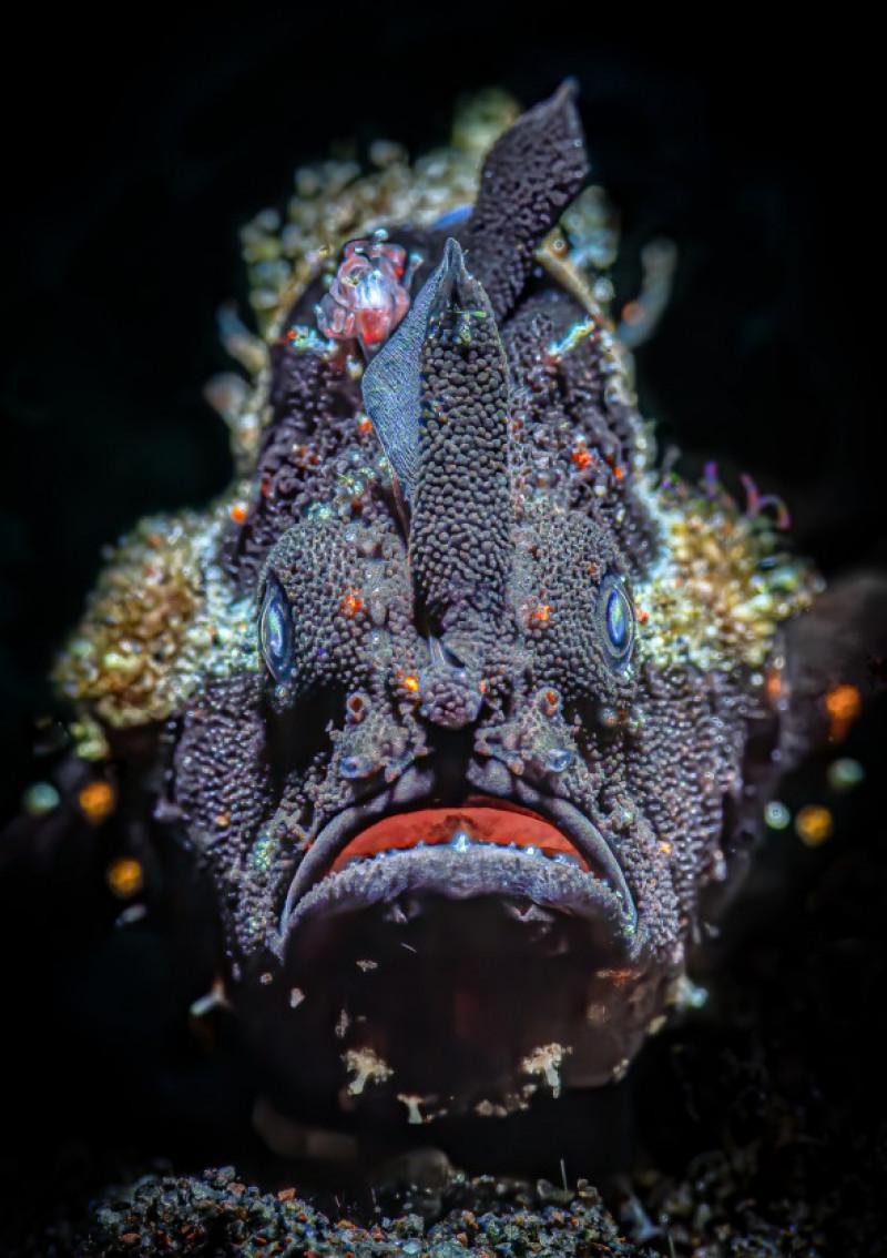 creaturi subacvatice (4)