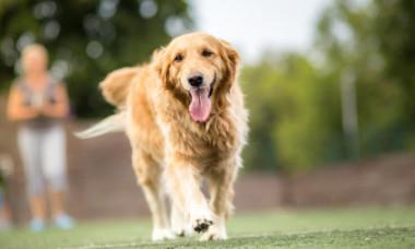 """Momentul inedit în care un câine scapă o minge printre gard. Imaginile sunt virale: """"M-a făcut să izbucnesc în râs! Tipic!"""""""
