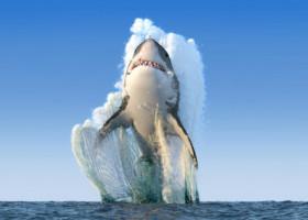 Momentul șocant în care un rechin sare din apă și mușcă piciorul unui bărbat care făcea parasailing pe Marea Roșie