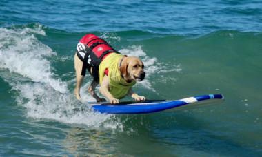 Un câine a fost filmat în timp ce făcea surf. Abilitățile lui sunt impresionante
