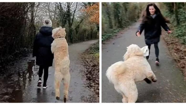Momentul în care un câine îi fură stăpânei sale căciula de pe cap. Imaginile sunt virale