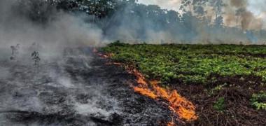 """FOTO: Incendiile de vegetație din Pădurea Amazoniană sunt """"o criză internațională"""""""