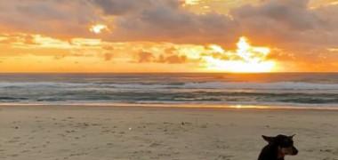 Un câine își așteaptă stăpânul pe plaja unde acesta și-a pierdut viața
