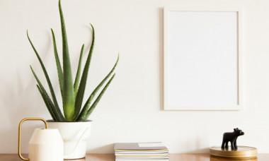 Plante care curăță aerul din locuință și reduc nivelul de toxine