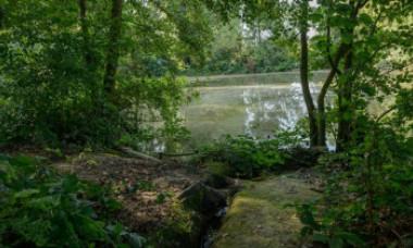 Cazul misterios al fraților români găsiți împușcați în cap, pe malul unui lac din Belgia. Un polițist a fost arestat
