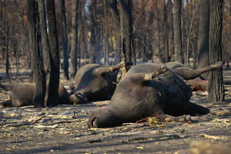 Bushfires Burn Across Victoria