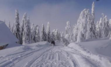 Cod galben de ninsori și viscol. Cum va fi vremea în București