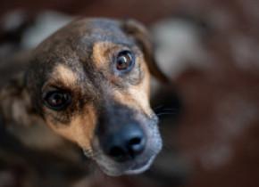 Primul muzeu din România dedicat câinilor fără stăpân se deschide duminică