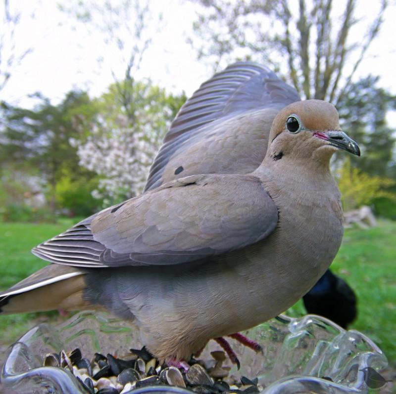 bird8