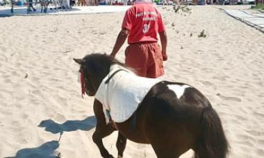 Ce au pățit doi bărbați care închiriau ponei turiștilor pe plajă