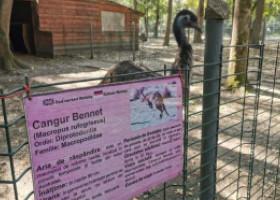 Trei câini au intrat la grădina zoologică din Timișoara și au ucis toți cangurii. Pasărea Emu a scăpat cu fuga