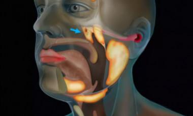 Un nou organ din corpul uman a fost descoperit din greșeală. Unde este situat și ce funcții are