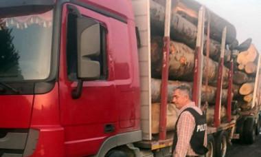 Un primar a fost prins la volanul unui camion cu lemne furate. Scuza incredibilă găsită de edil