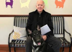 Joe Biden a alunecat când se juca cu câinele și are fracturi la oasele tarsiene. Cum a reacționat Donald Trump