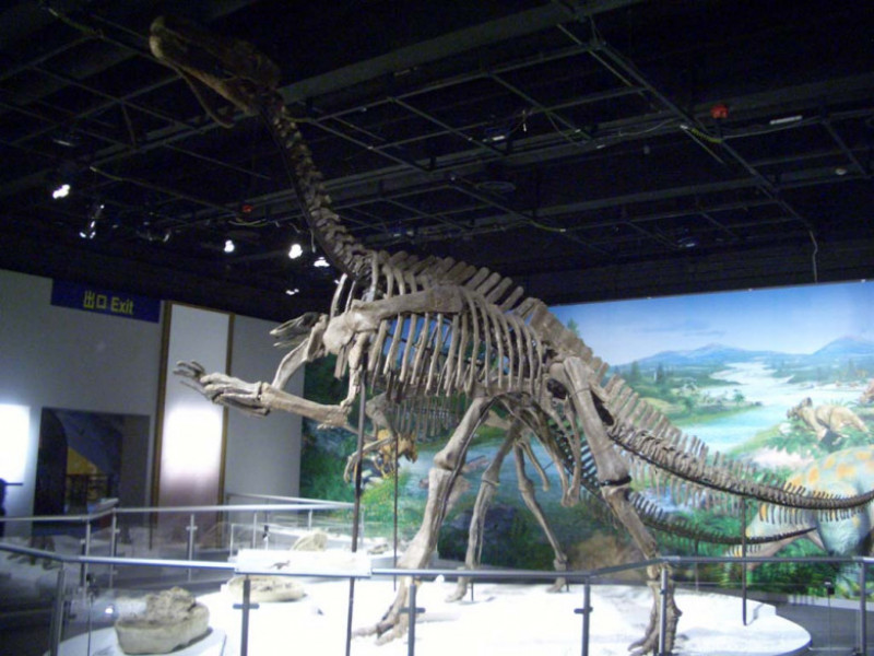 Iguanodon_skeleton