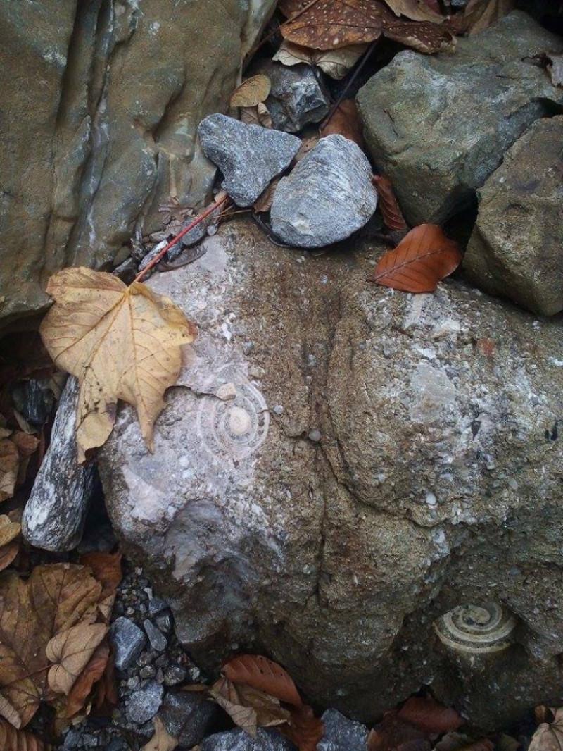 fosile marine 1