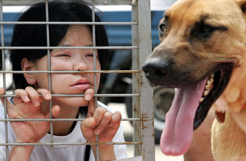 Campaign Opposing The Eating of Dog Meat