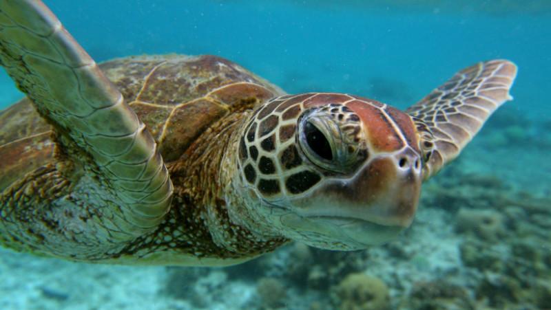 Scenes Of Lady Elliot Barrier Reef Eco Island