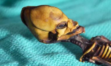 """Misterul ADN-ului sinistru al """"extraterestrului"""" din Atacama a fost dezlegat"""