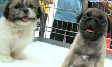 Decizia luată de China - ce se întâmplă cu câinii din întreaga țară