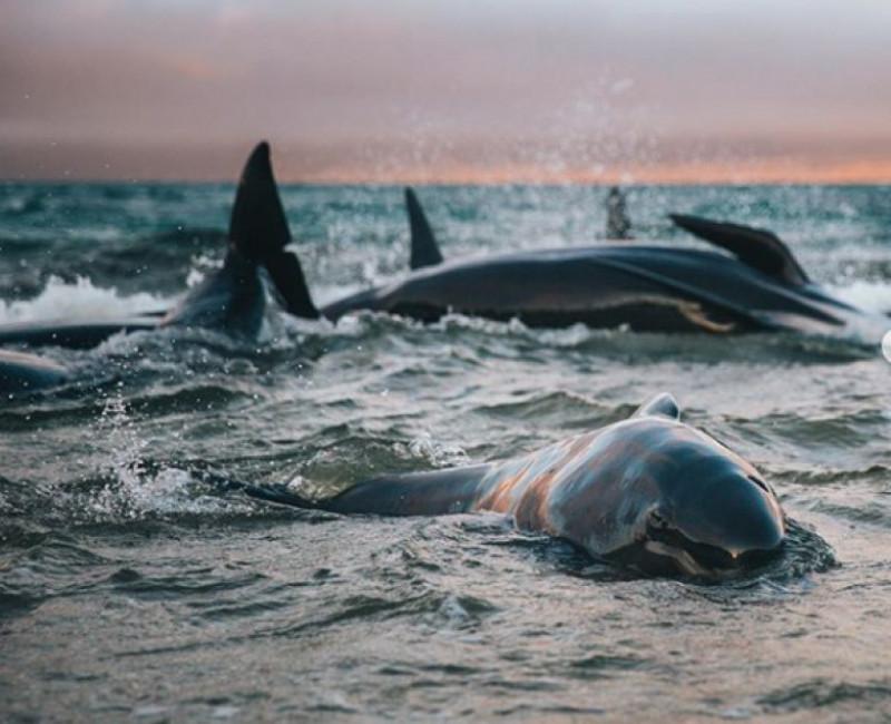 balene esuate instagram
