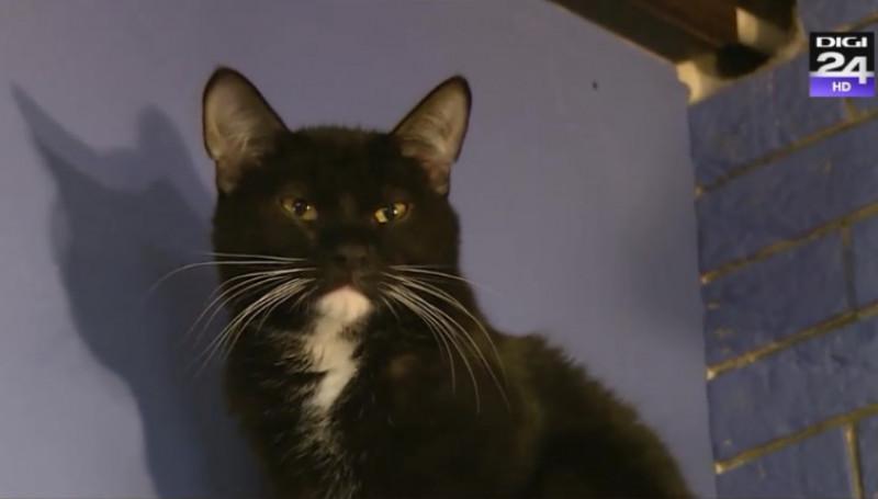 pisica cu mustati mari