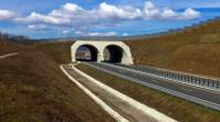Cum trece ursul autostrada. Imagini cu primul ecoduct din România